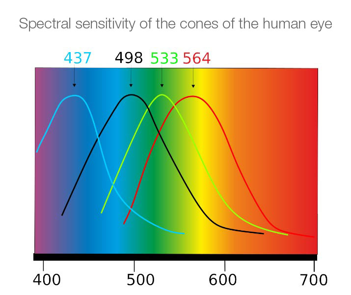 The Eye And Color Perception